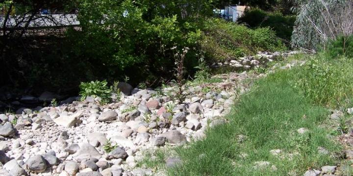 York Creek Riparian Habitat Enhancement Project